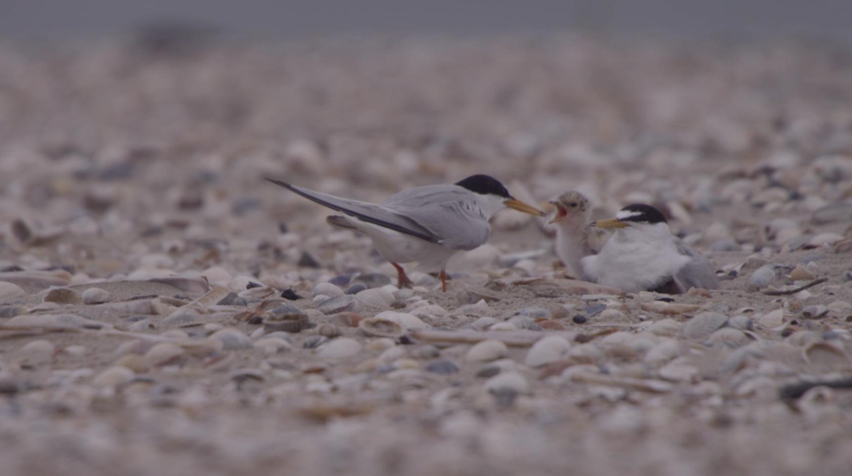 Rubens Blog – Vroege Vogels